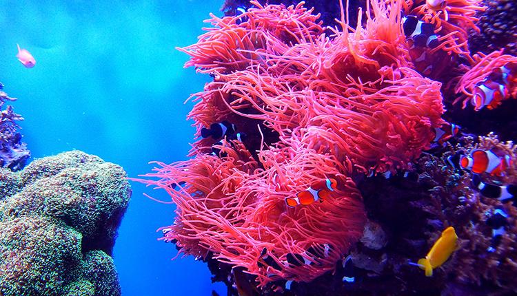 Récif corallien © ICRI