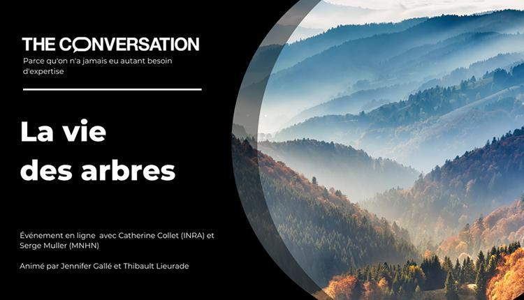 La vie des arbres The Conversation