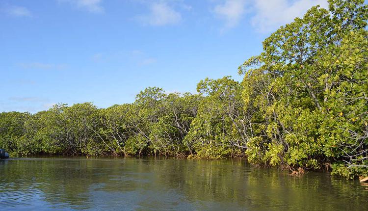 Mangrove © Fanny Cautain / OFB