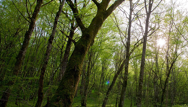 Forêt domaniale d'Arc-Châteauvillain © Franck Fouquet DR