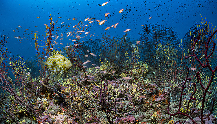 Fonds marins du Parc national des Calanques © Laurent Ballesta, Andromède Océanologie, Gombessa Expeditions