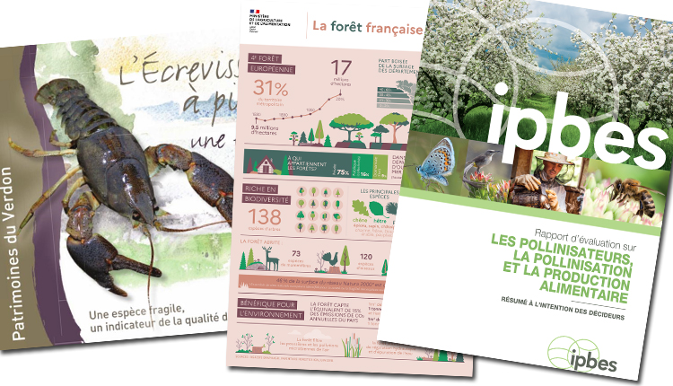 Publications Août 2020