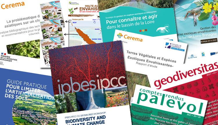 Publications Juillet 2021