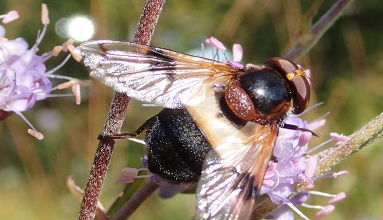 Cycle de séminaires techniques RNF Les pollinisateurs, de la connaissance à la gestion © RNF