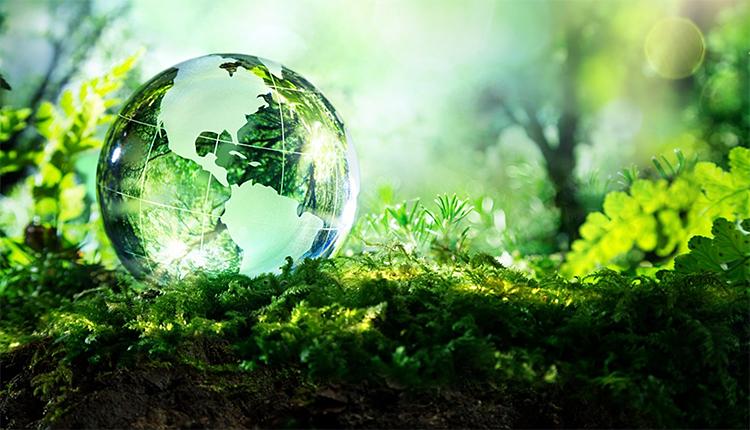 Biodiversité et Solutions fondées sur la Nature