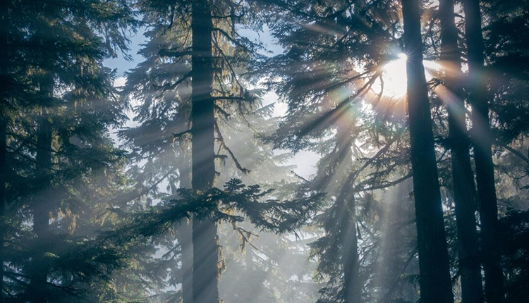 Rayons de soleil dans les arbres © Earth Day, 2021