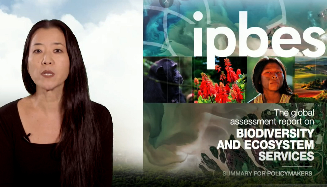 L'évaluation globale de la biodiversité et des services écosystémiques de l'IPBES © DR