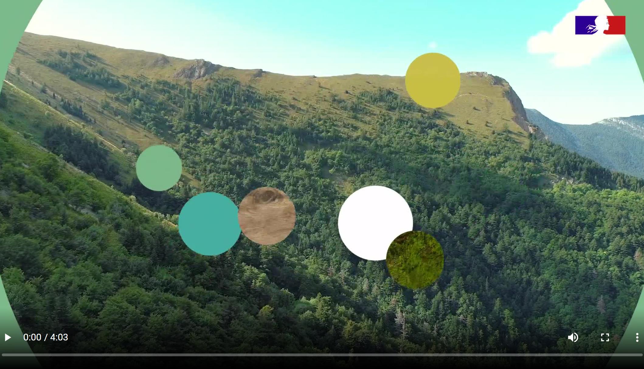 La réserve biologique intégrale du Bois du Chapitre - Petit Buëch inscrite au Patrimoine mondial de l'Unesco © ONF