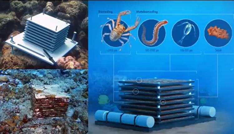 Biodiversité des récifs coralliens : dynamiques spatiale et temporelle du cryptobiome, Séminaire de l'ISYEB