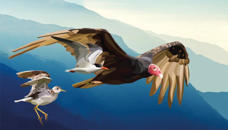 Affiche du World Migratory Birday 2021 © Sarah Wolman / World Migratory Birday