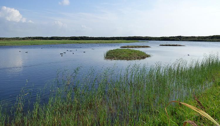 Znieff Baie de Somme Parc ornithologique du Marquenterre © O. Roquinarc'h / INPN